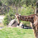 久しぶりの広島市安佐南動物園公園 年間パスポートまで買ってしまいました