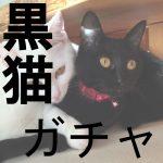 【黒猫ガチャ】アイドルキャッツガチャ 白猫ユーザーなのでエクセリア狙い!